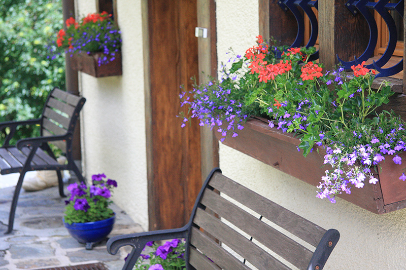 Window boxes on the front door step in summer